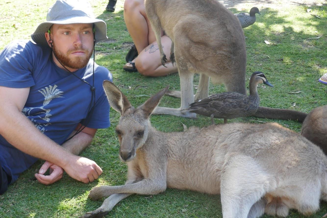 man hanging out with kangaroos